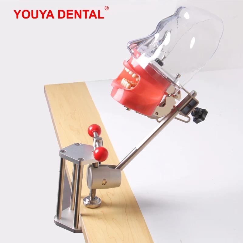 Модель стоматологических зубов для наполнения, обучения, обучения, стоматологии, стоматологии, модели зубов Phantom Manikins