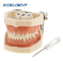 1 stücke Weiche Gum Alle Abnehmbare Dental Zähne Modell 28 stücke Zähne Dental Modell für Neue Zahnarzt Traning In Die schule
