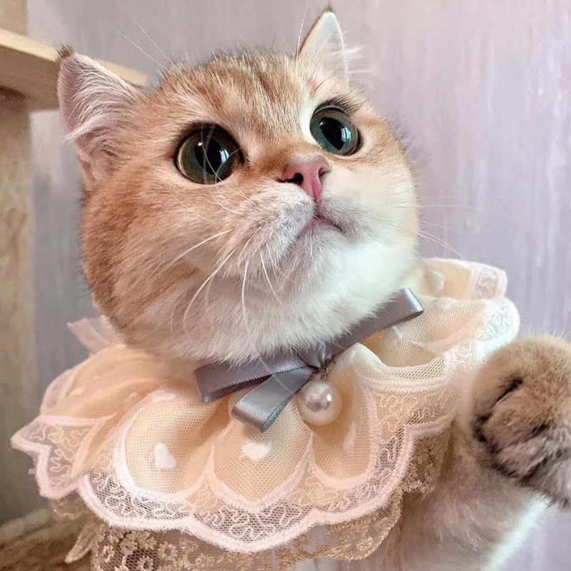 Princess Cat Bib Cute Lace Kitten Necklace Scarf Small Medium Dogs Collars Puppy Rabbits Bows Tie Pets Grooming Accessories