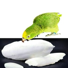 1 sac seiche seiche Sepia os Sepia poisson oiseau nourriture Calcium Pick pierre pour animal de compagnie perruche perroquets Hamster oiseau jouet
