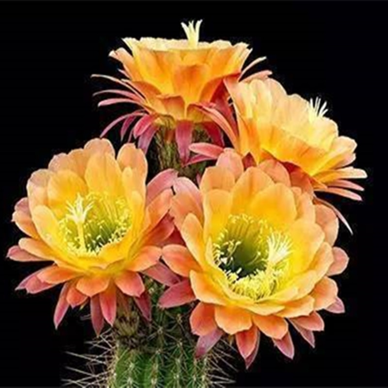 armario-de-bano-con-semillas-de-cactus-plantas-suculentas-de-colores-wg-p-de-muebles-para-el-hogar-30-uds