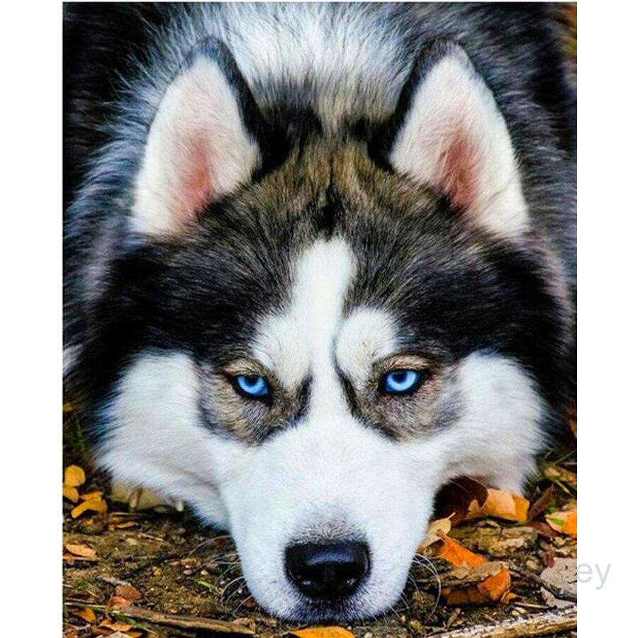 LZAIQIZG, tienda oficial, pintura de diamantes, animales, Husky, perro, bordado de diamantes, juego completo, mosaico de diamantes, decoraciones de diamantes de imitación