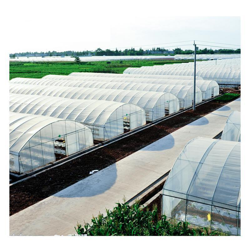 Economic hot galvanized Agricultural vegetable poly tunnel single-span green house