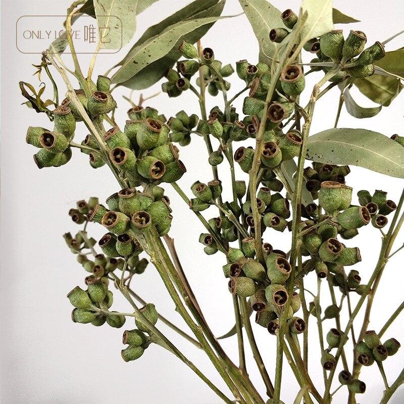 2 uds. de flores secas, frutas secas de eucalipto, decoración suave y...