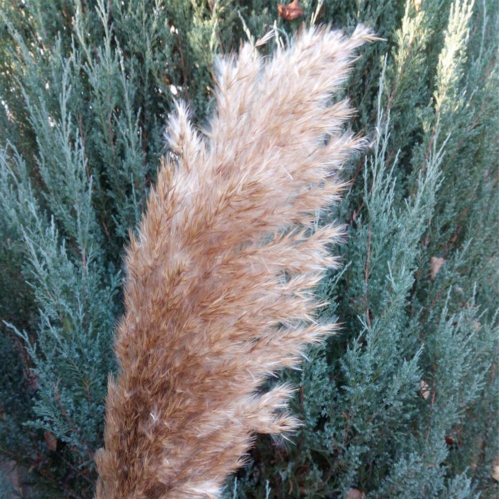 Купить с кэшбэком Free Shipping Dried Pampas Grass Decor Wedding Flower Bunch Natural Plants for Home Christmas Decorations 2021