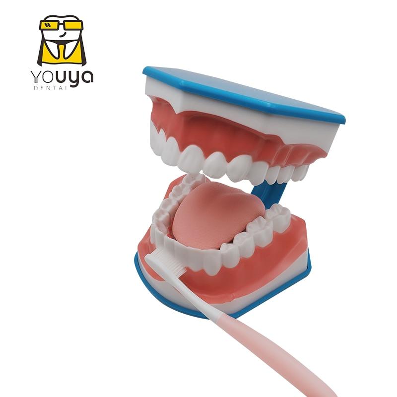 Стандартная модель для обучения стоматологии, обучающий демонстрационный инструмент для чистки зубов