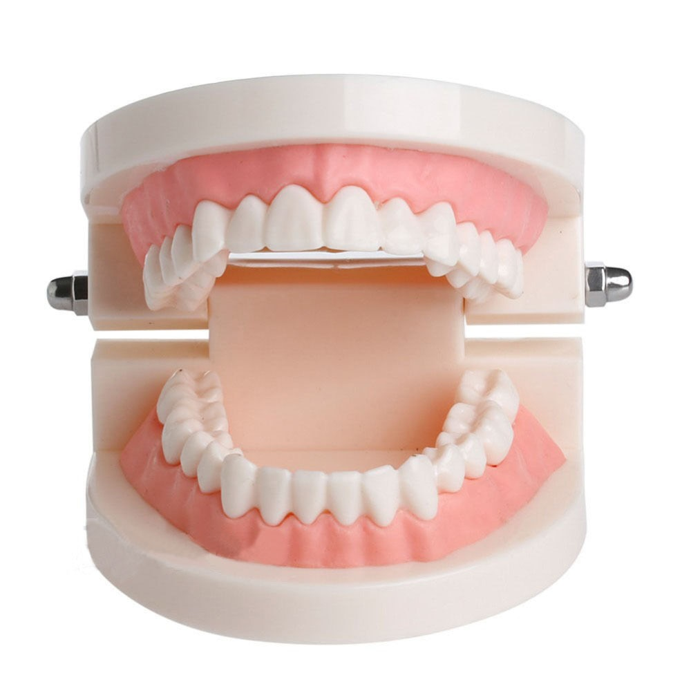 Cepillo modelo de enseñanza estudio Dental modelo de enseñanza de dientes Caries Educación de equipo de cuidado Dental dentista cuidado bucal molde Dental