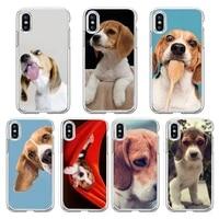 beagle dog phone case transparent soft for iphone 13 12 11 8 7 plus mini x xs xr pro max