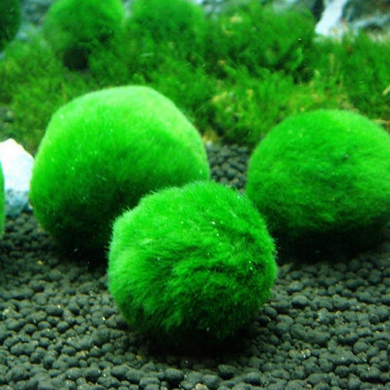 4cm Mini Aquarium Plant Fish Tank Shrimp Nano Premium Quality Moss Balls Fish Tank Ornament Decoration Aquarium Accessories