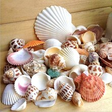 Coquilles daquarium plage nautique bricolage   Mixte, environ 100g coquillages de mer, décor de noël