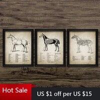 Affiches danatomie de cheval imprimees Vintage  Illustration danatomie de cheval  peinture sur toile artistique  images equestres  decor de maison  decoration murale