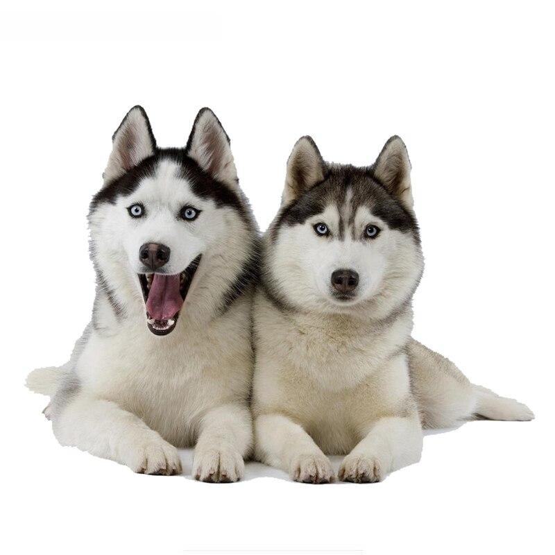 Забавные автомобильные наклейки с двумя Хаски собаками, наклейки с животными, наклейки с собаками, Автомобильные украшения из винила, 14 см * ...