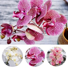 3D Printing Artificial Orchid Flowers Cherry Spring Plum Peach Blossom Branch Silk Fake Flower Home Wedding DIY Decoration