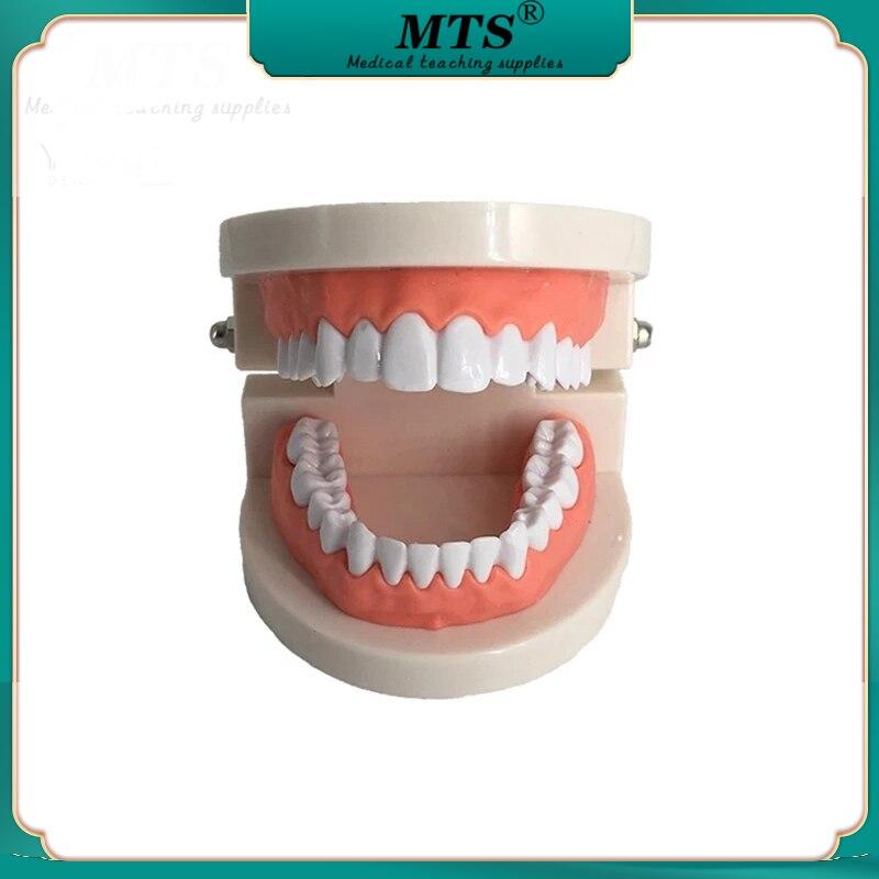 Модель зубной щетки для ухода за зубами, модель учебной модели зубной щетки с мягкими деснами для 28 зубов зубной гель экопром cliny к104 75мл