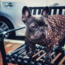 Pomeranian Fashion Print Sweater Chihuahua Pug Summer Tshirt Yorkshire Apparel PC0900