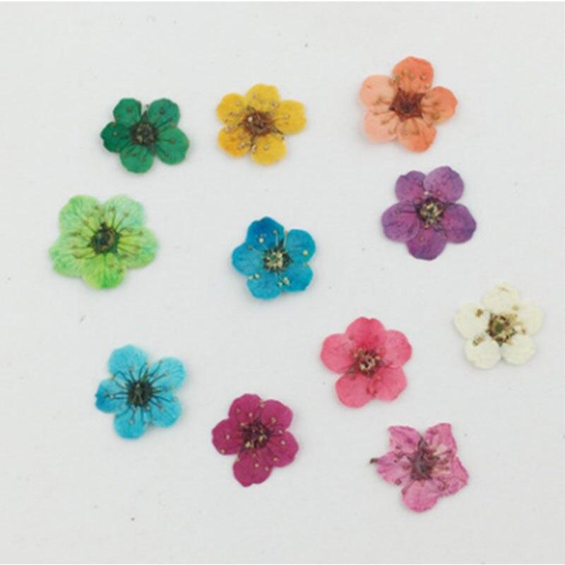 30 шт./компл. сухие цветы для ногтей декор для ногтей сухие сушеные цветы сделай сам советы для макияжа красота маникюр декоративные сушеные цветы случайный цвет
