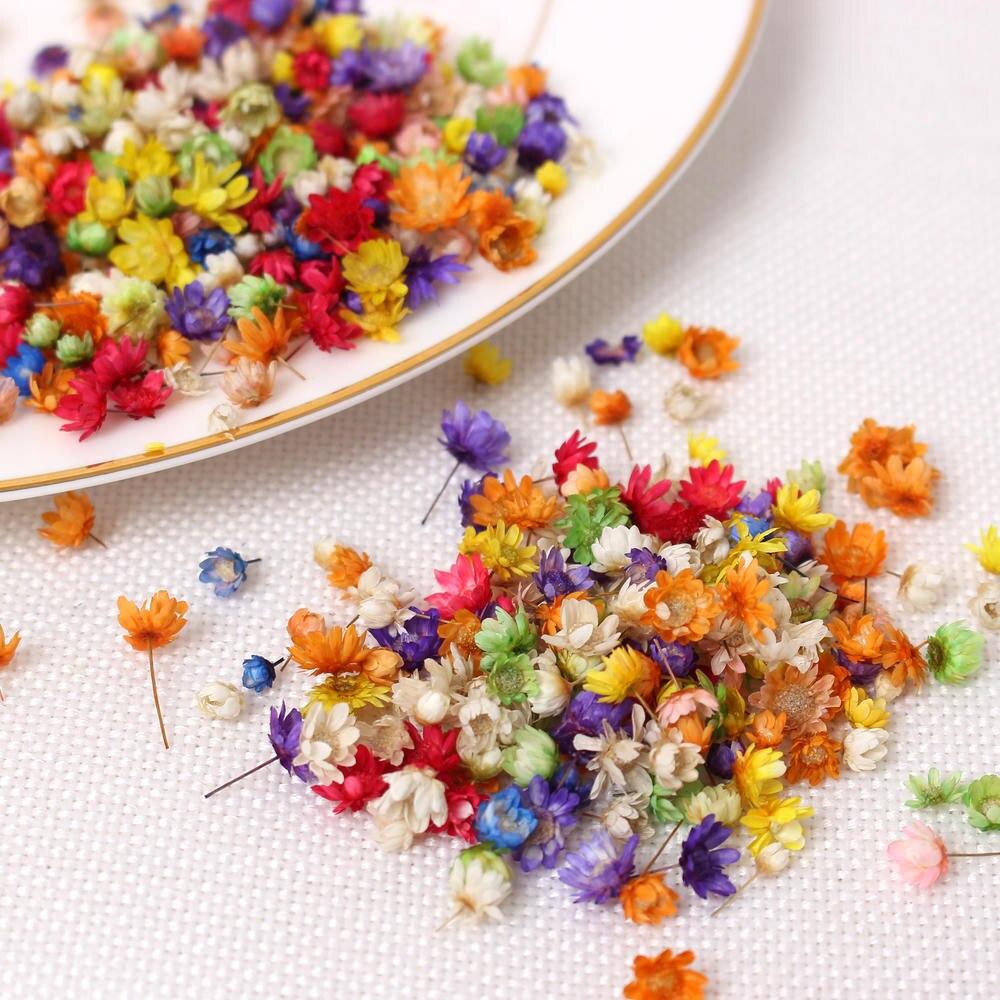 200 шт. настоящие сушеные цветы для творчества, изготовление свечей из эпоксидной смолы, изготовление ювелирных изделий, стеклянная крышка, н...