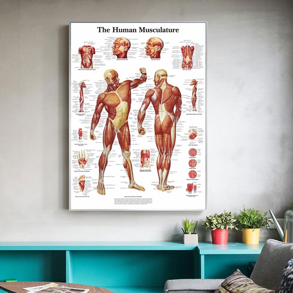 Lona pared arte 1 Panel Anatomia Humana Poster impreso en alta definición...