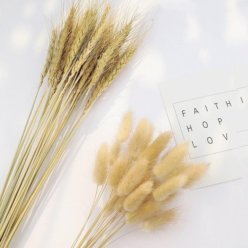 10/30 Uds flores naturales secas pequeñas Pampas hierba fragmitas trigo Natural boda decoración del hogar planta Real