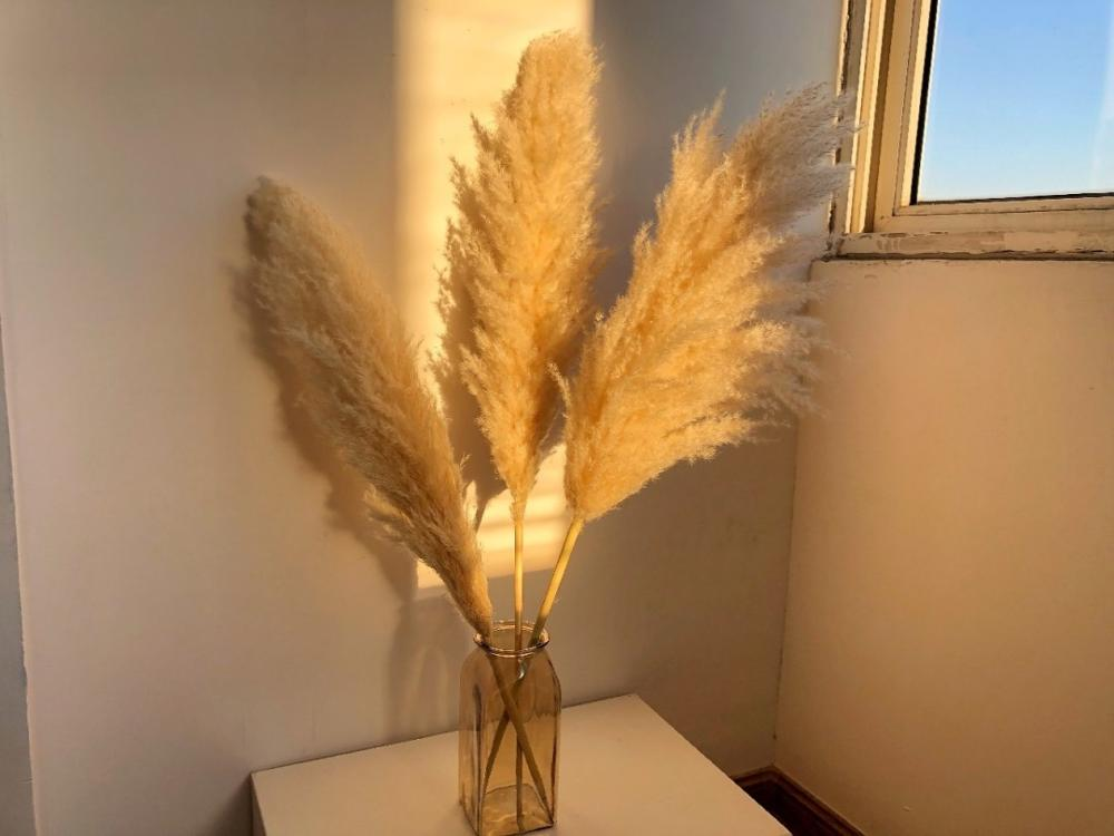5pcs/10pcs Pampas Beige Home Decoration Valentine's Day Wedding Artificial Dried Flowers Christmas 2021 NEW
