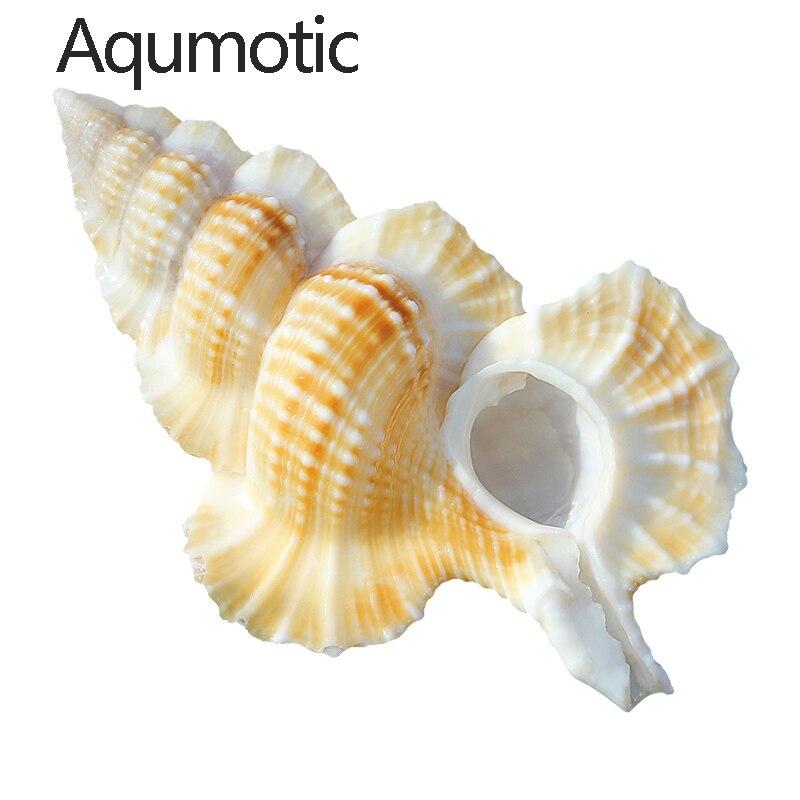 Aqumotic inusual Winged Frog Shel amarillo de capa fina Concha naturaleza 1pc mar Gyrineum Perca colección poco común flanco
