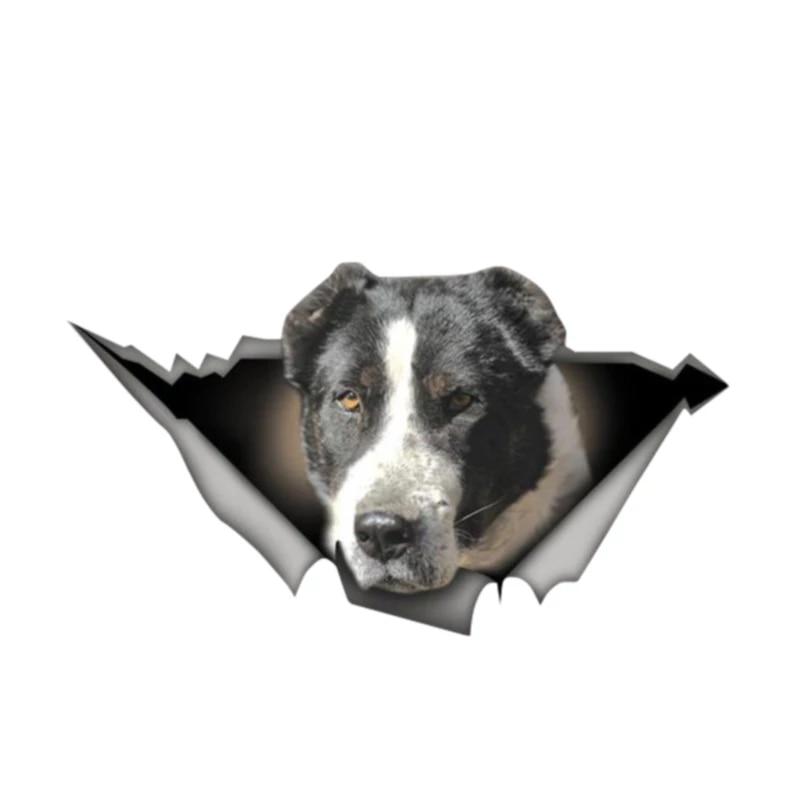 Calcomanía de PVC con personalidad para coche, pegatina de perro para coche,...