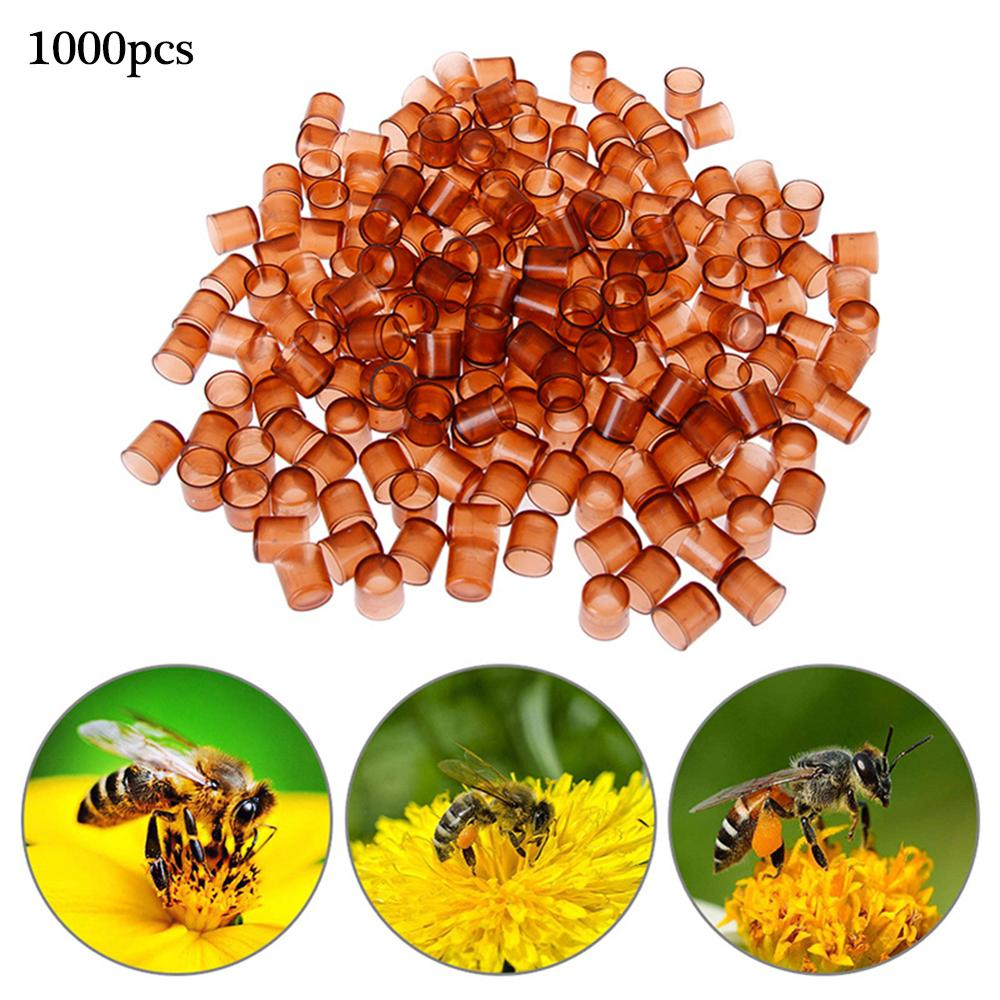 beekeeping tools protective cover base bee queen king cage accessories fertility king pedestal guard cage cover bee equipment 10 1000 Pcs Bee Queen Rearing King New Plastic Brown Color Cells Cages Room Cups Cell Cage Cup Bees Tools Beekeepers Equipment