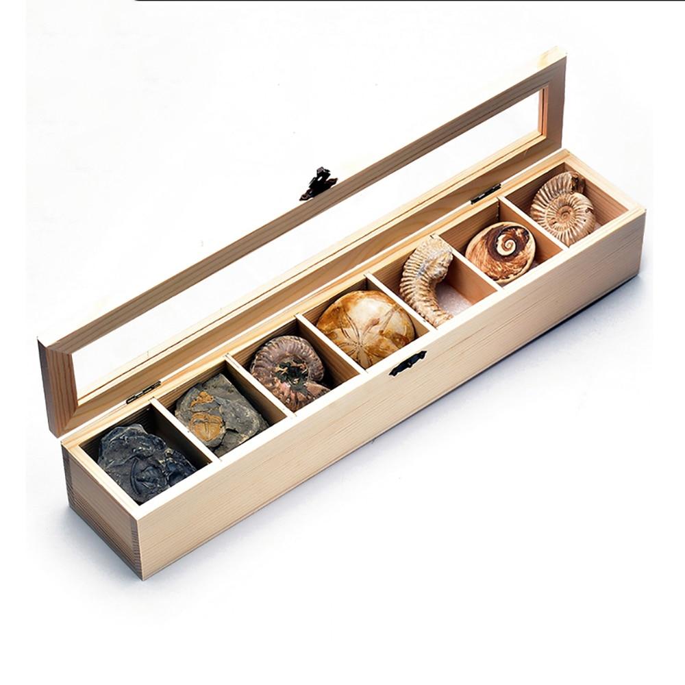 Mineral crudo, piedra rugosa, Paleontología, espécimen fósil, planta de ammolita de Trilobite, insecto, espécimen biológico fósil