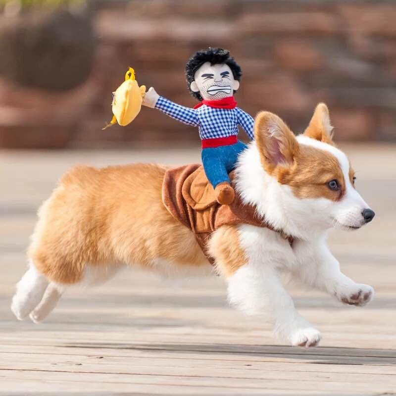 Ropa para perros y mascotas, traje para mascotas, traje de jinete de vaquero con sombrero y bolsas de dinero, ropa divertida de perro de Halloween, Disfraces para perros pequeños y medianos