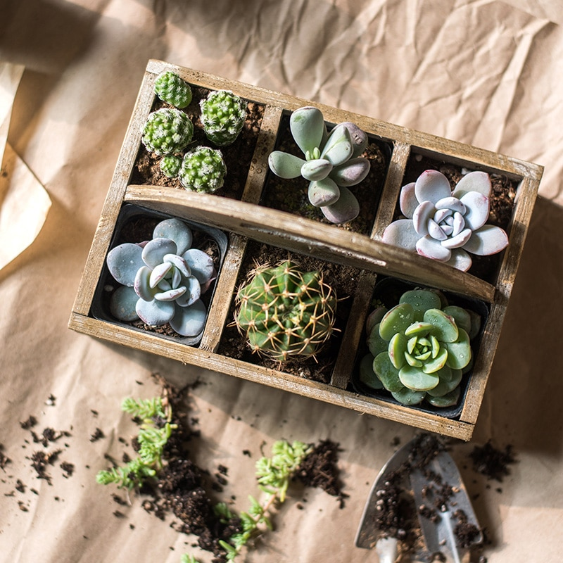 Maceta de plantas suculentas, maceta de madera creativa y bonita para oficina,...