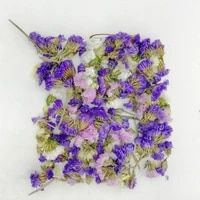 mixed colors natural dried flowers heads do not forget me for diy crafts bookmark card making resin decoration accessories