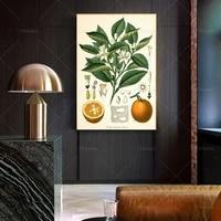 citrus fruit oranges botanical kitchen art print citrus print citrus poster citrus art vintage print wall poster printprints