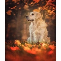 diy embroidery diamond painting dog and fallen leaves diamond mosaic full square 5d diamant painting golden retriever unframed