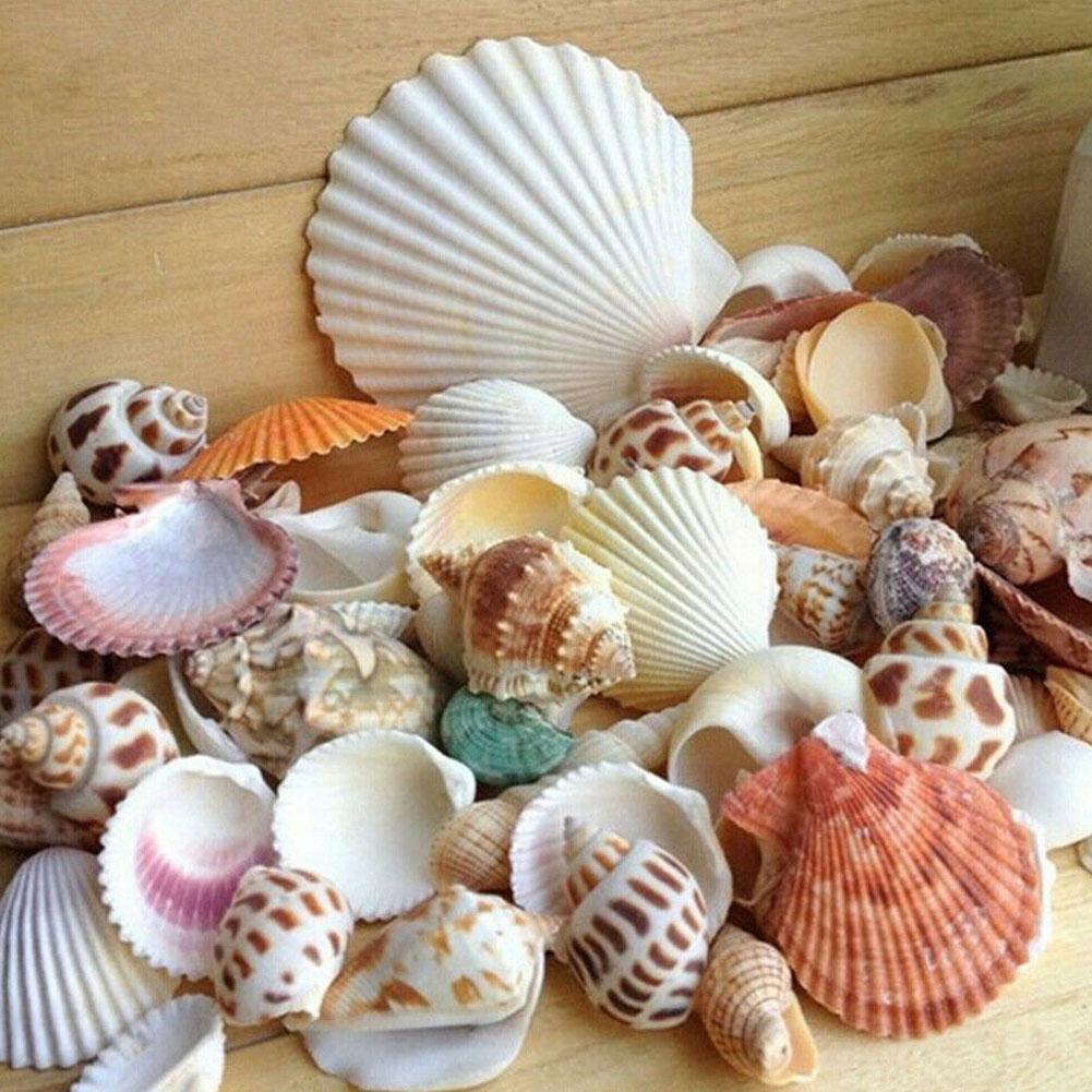 100 г/пакет смешанные аквариумные пляжные морские Diy S смешанные оптом приблизительно морские O5j7