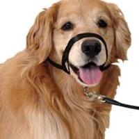pet nylon mask adjustable leader belt dog collar no pull bite straps harness head collar muzzle dog halter training leash muzzle