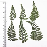 60pcs pressed dried davallia mariesii leaf flower plant herbarium for jewelry photo frame phone case bookmark making diy