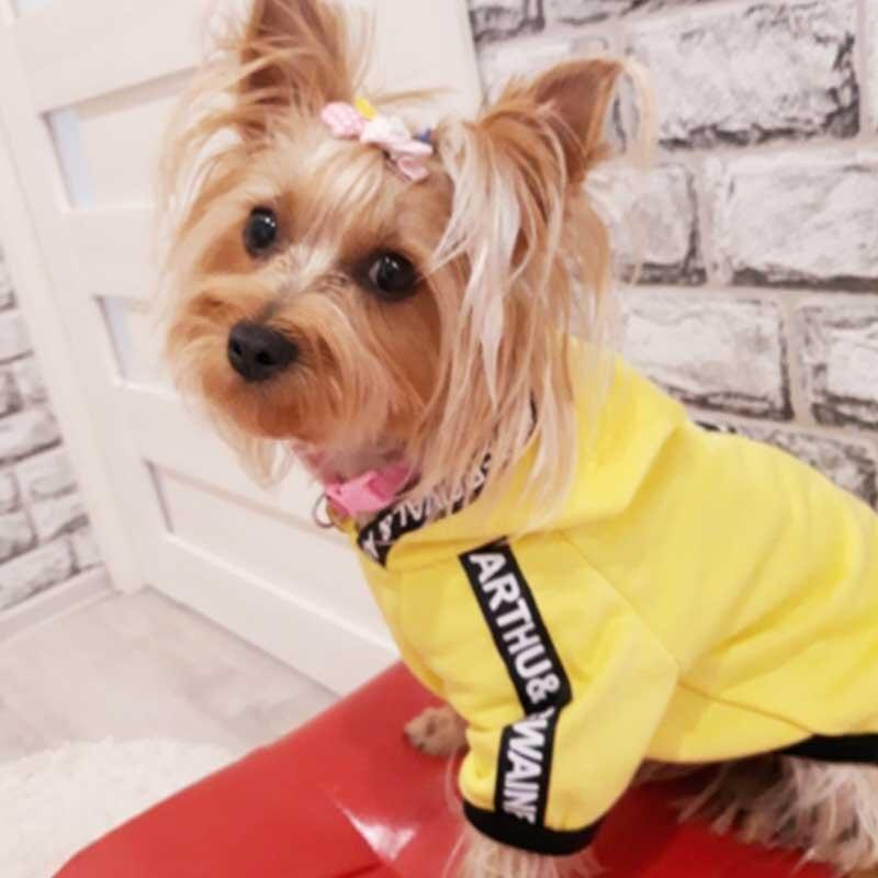 Модная одежда для собак; Весенняя одежда для домашних животных; Одежда для маленьких средних собак; Костюм для досуга; Толстовка с капюшоном для собак; Одежда для щенков Чихуахуа; Ropa Perro