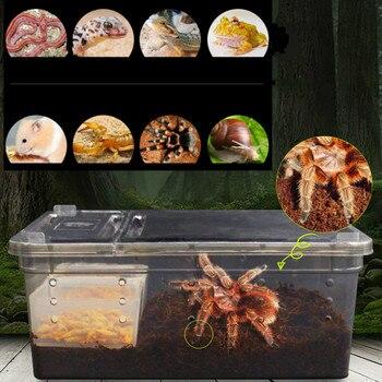 Transparent Terrarium For Small Amphibians & Reptiles  9