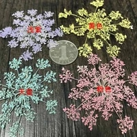 250pcs pressed dried carrot flower queen annes lace plants herbarium for jewelry photo frame postcard diy making accessories