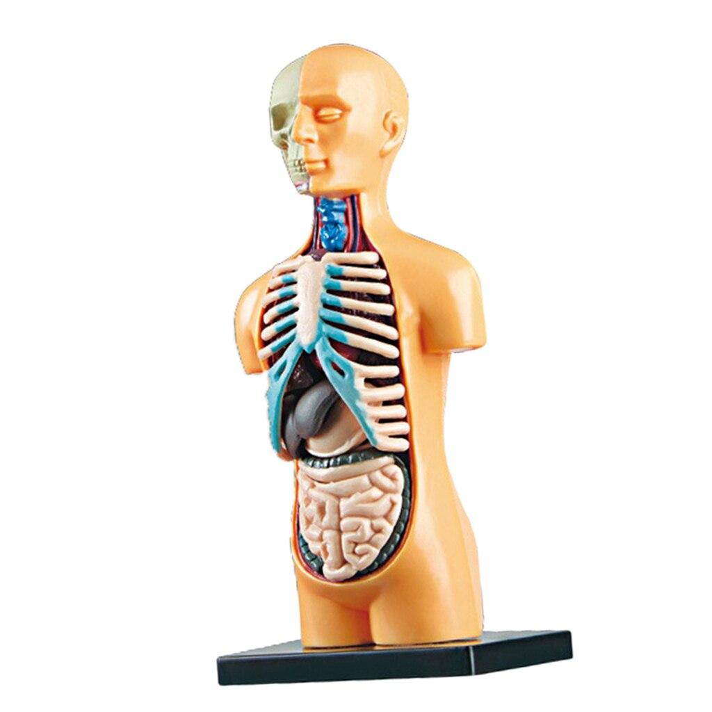 Человека для тела демонстрация на модели со съемными органы Анатомия человека Дисплей Ассамблеи игрушек лаборатории Наборы