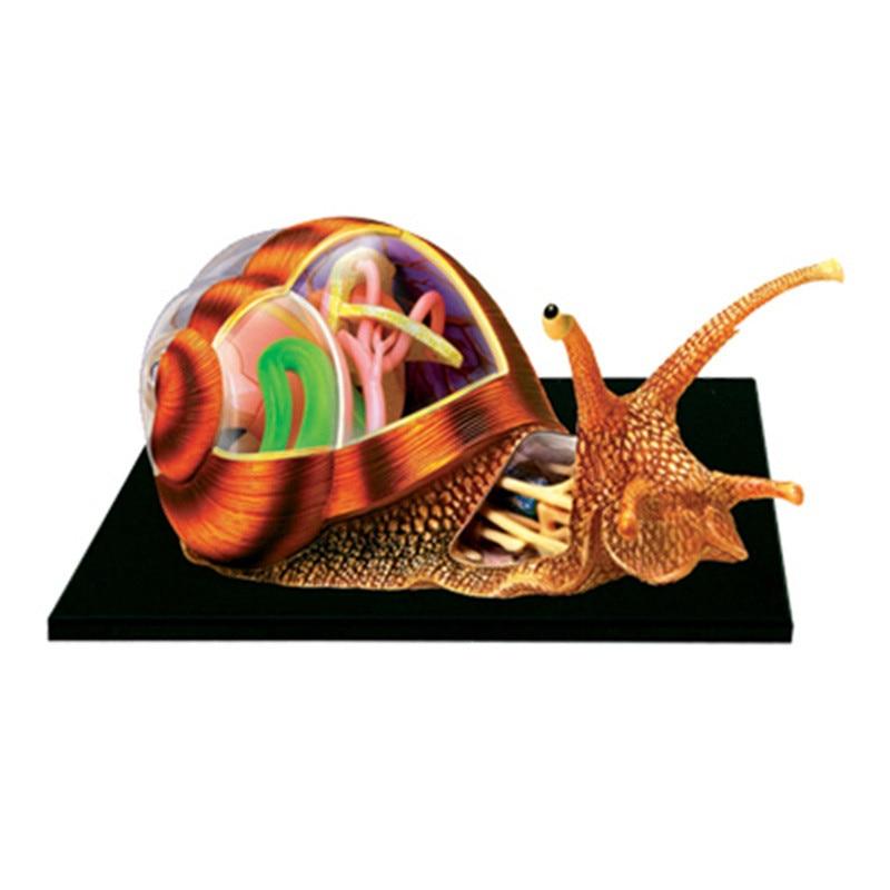 HOTSALE Assembling Toys For Intelligence   Animal Snail Organ Anatomy    Medical Teaching Model Device