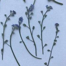 Do me sur tiges fleurs naturelles pressées   Bricolage, décoration florale, fleurs séchées, livraison gratuite, 30 pièces