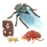 insect cicada lore life cycle 4 pcs insect figure shows life of lady bug