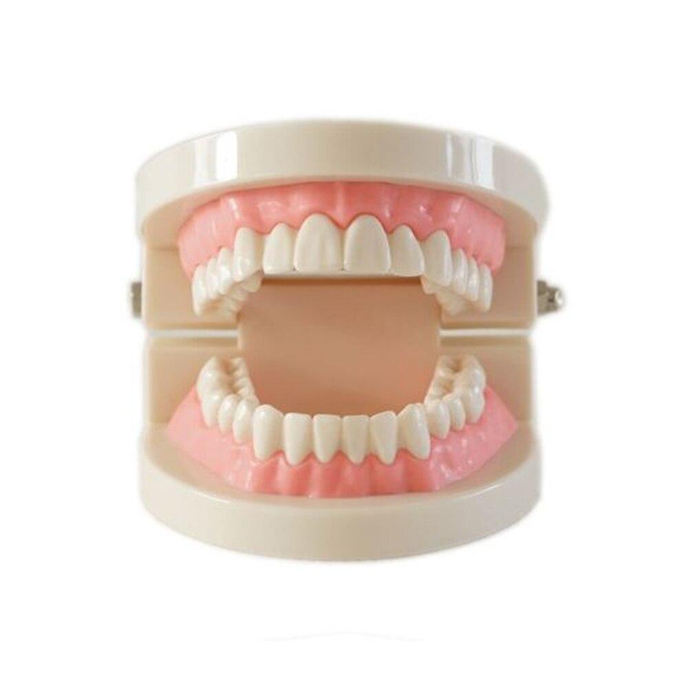 Медицинский учебный инструмент, модель зубов, Стоматологическая модель, специальное украшение, клиника, персонализированные декоративные ...